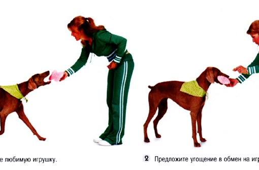 Апорт (команда) собаке: что значит, как научить