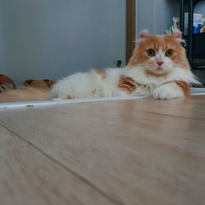 Жизнерадостный малыш кинкалоу — необычный питомец у вас дома