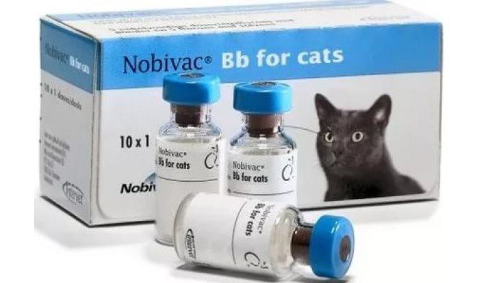 Нобивак для кошек и котов