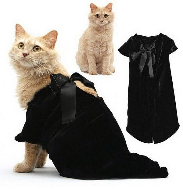 Как правильно выбрать и сшить самостоятельно одежду для кота