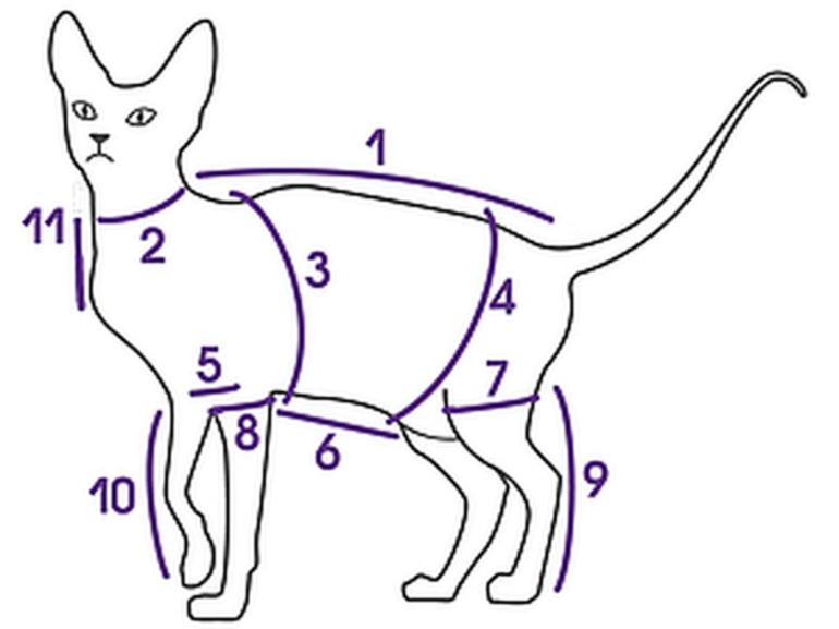 Одежда для кошек: выкройка и шитье своими руками