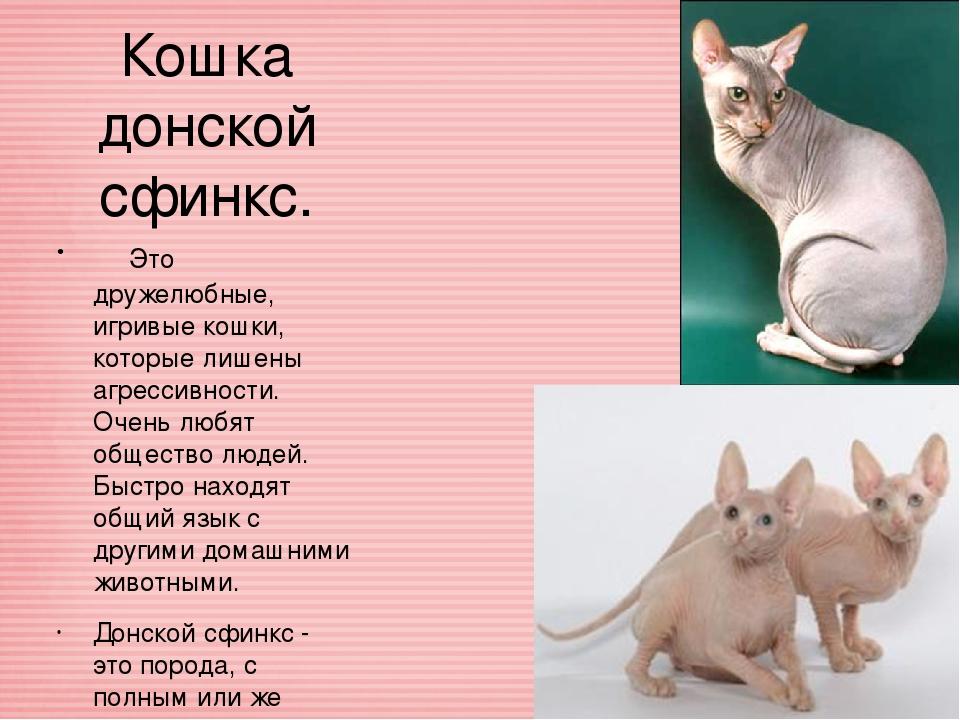 Порода кошек донской сфинкс