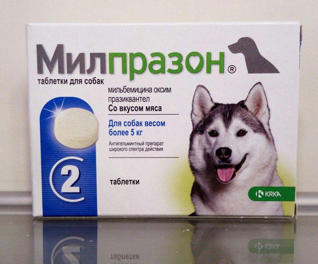 Средство Милпразон: защита кошки от глистов