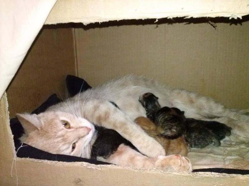 Новорожденные котята: как ухаживать в домашних условиях
