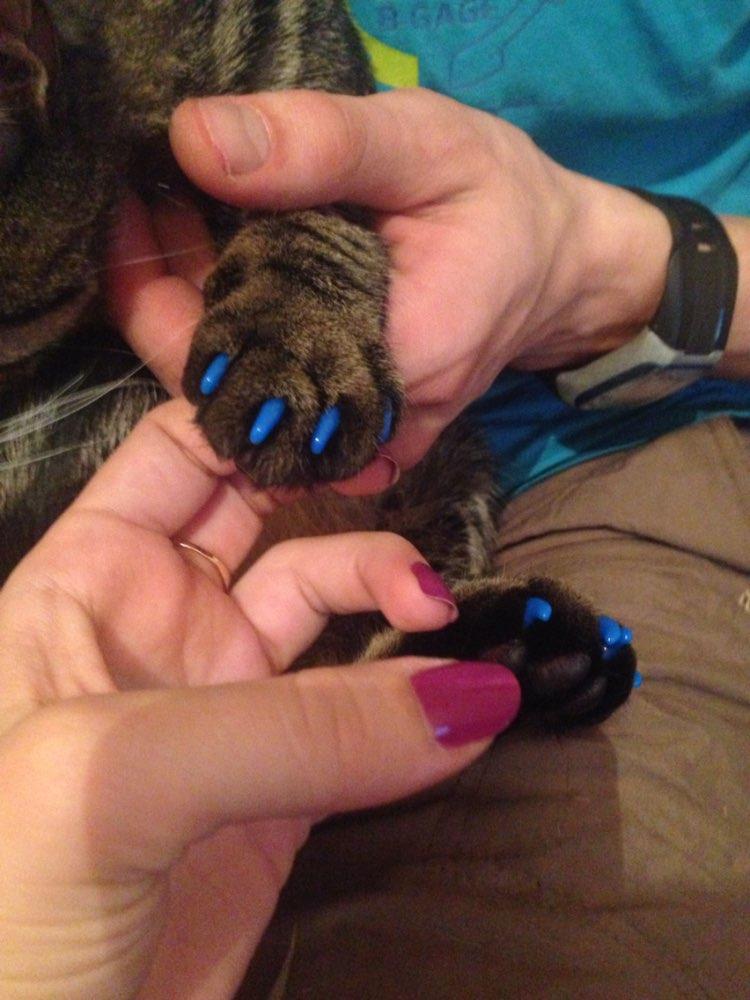 Антицарапки для кошек: как одеть колпачки для когтей и снять их