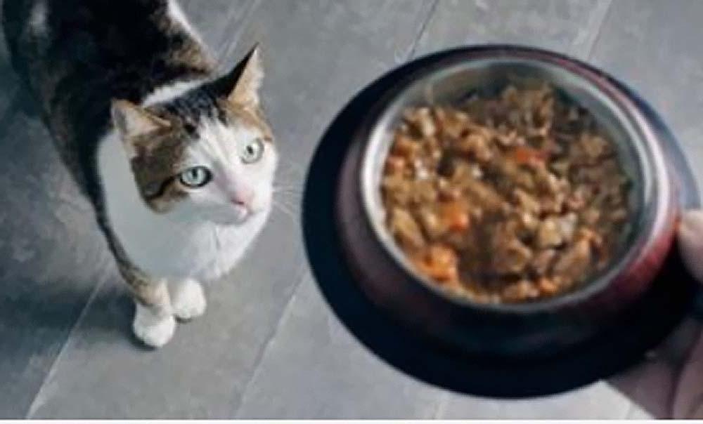 7 условий, которые придется соблюдать, чтобы не раздражать своего кота