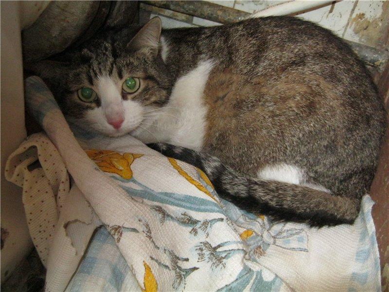 Кошка вялая, все время спит и мало ест: что делать