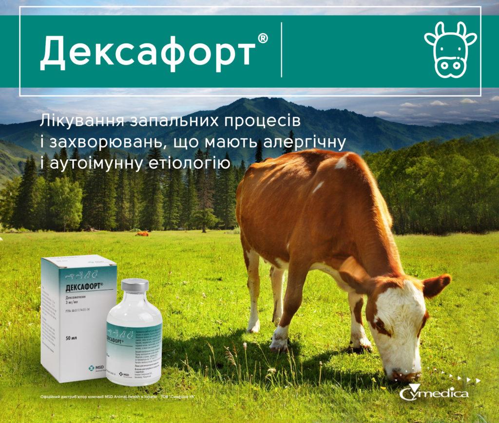 Дексафорт для собак
