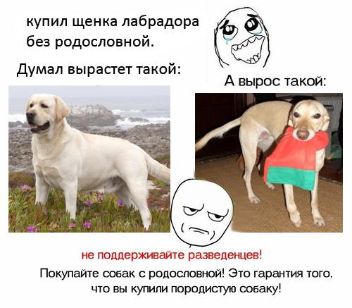 Алиментный щенок: что это значит при покупке