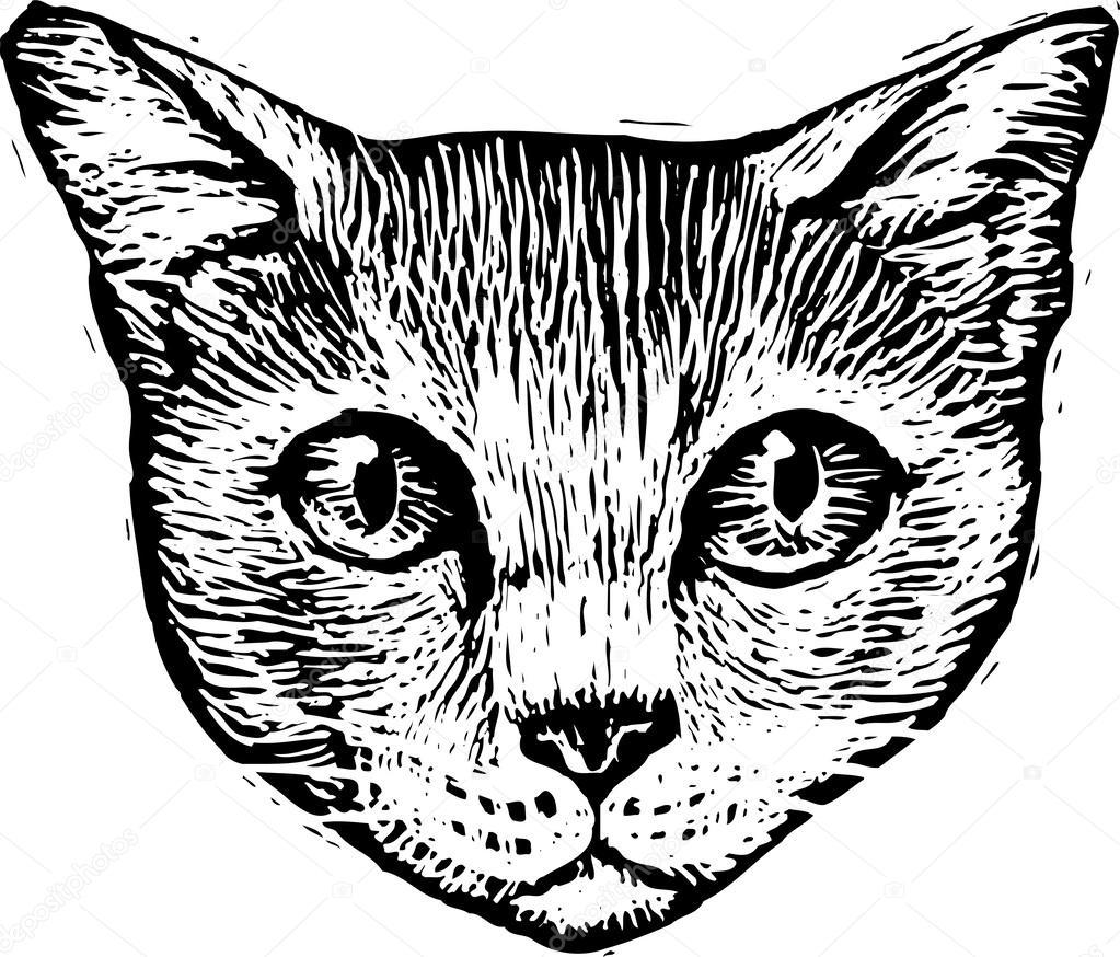Рисуем морду кошки