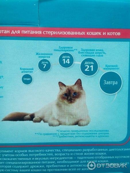 Сколько живут коты в домашних условиях кастрированные: срок жизни