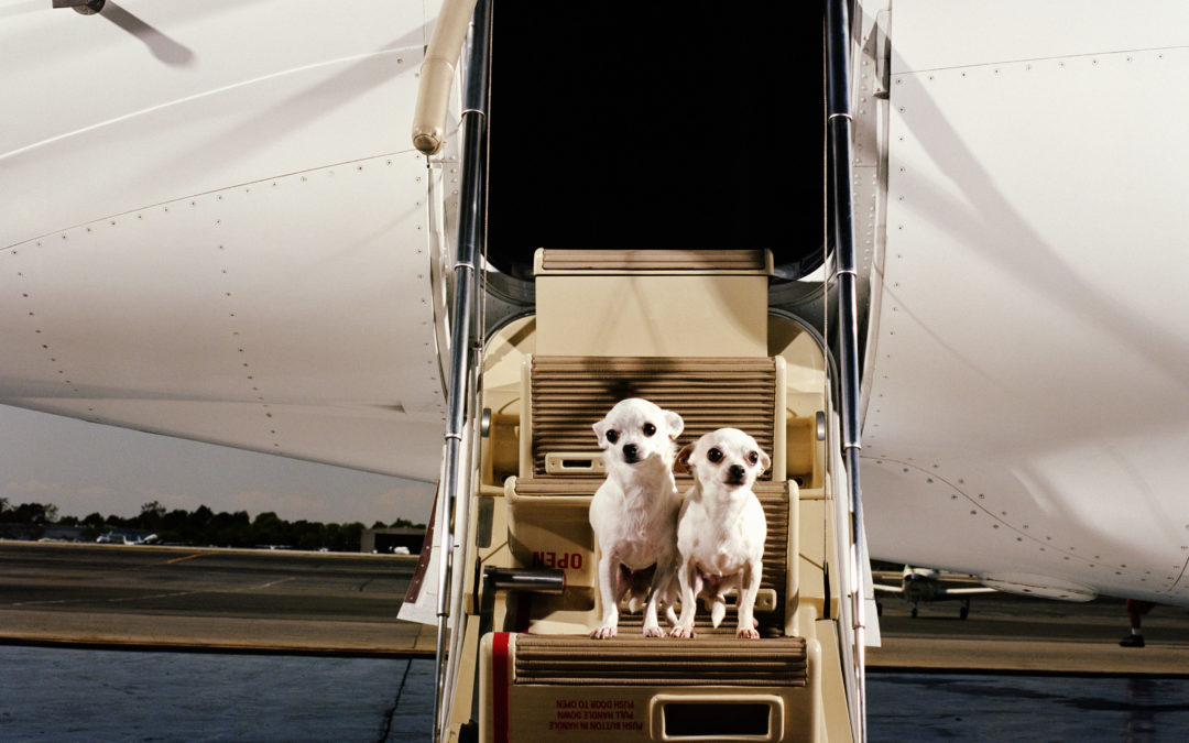 Перевозка собак в самолете по России и за границу