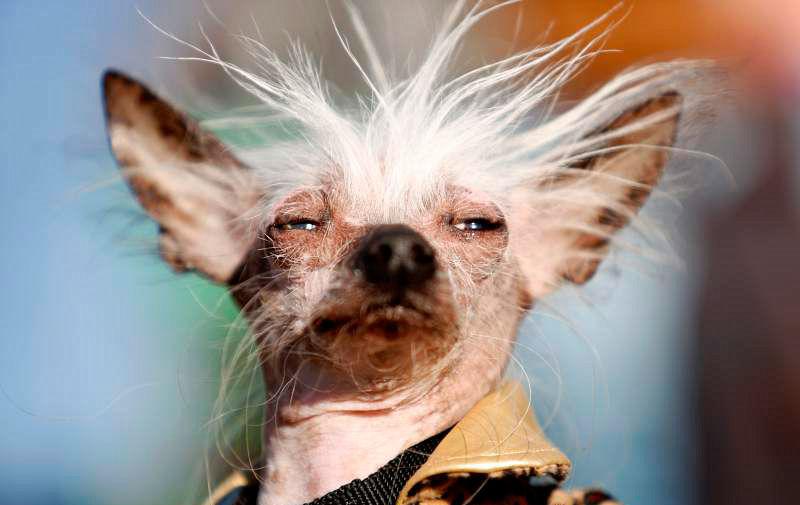 Самые смешные породы собак: их названия и фото