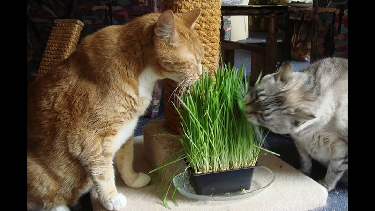 Собака ест траву на улице: какая причина