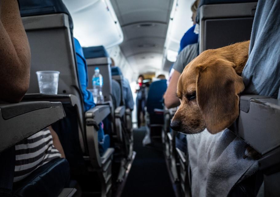 Переноска для собак в самолет: какой нужен контейнер