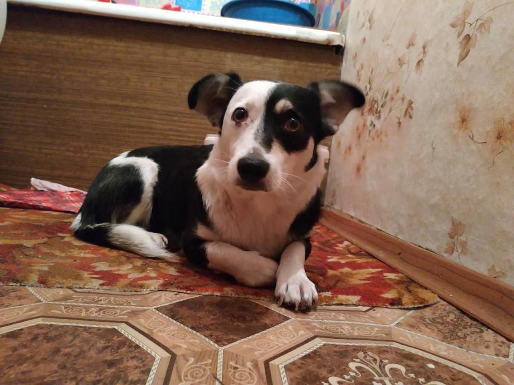 Собаки компаньоны: список пород для квартиры
