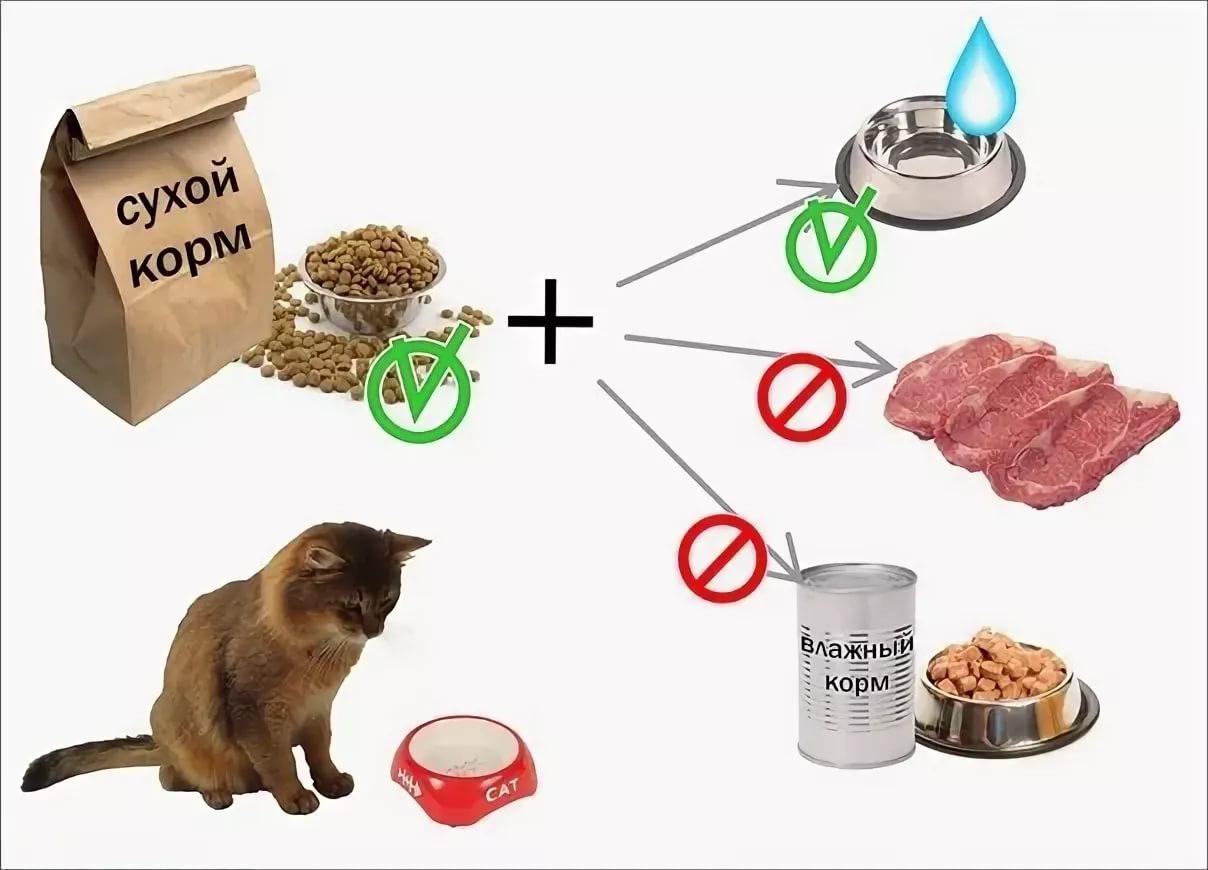 Правильное питание кошек и котов
