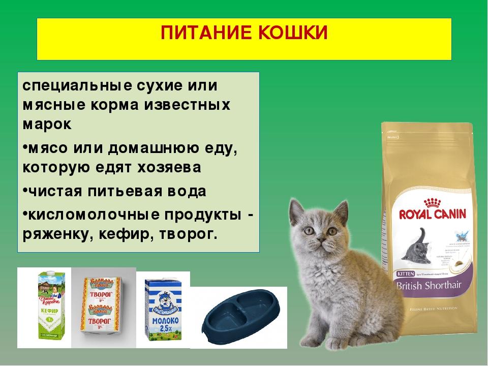 Можно ли кормить кошку сырым мясом и только им