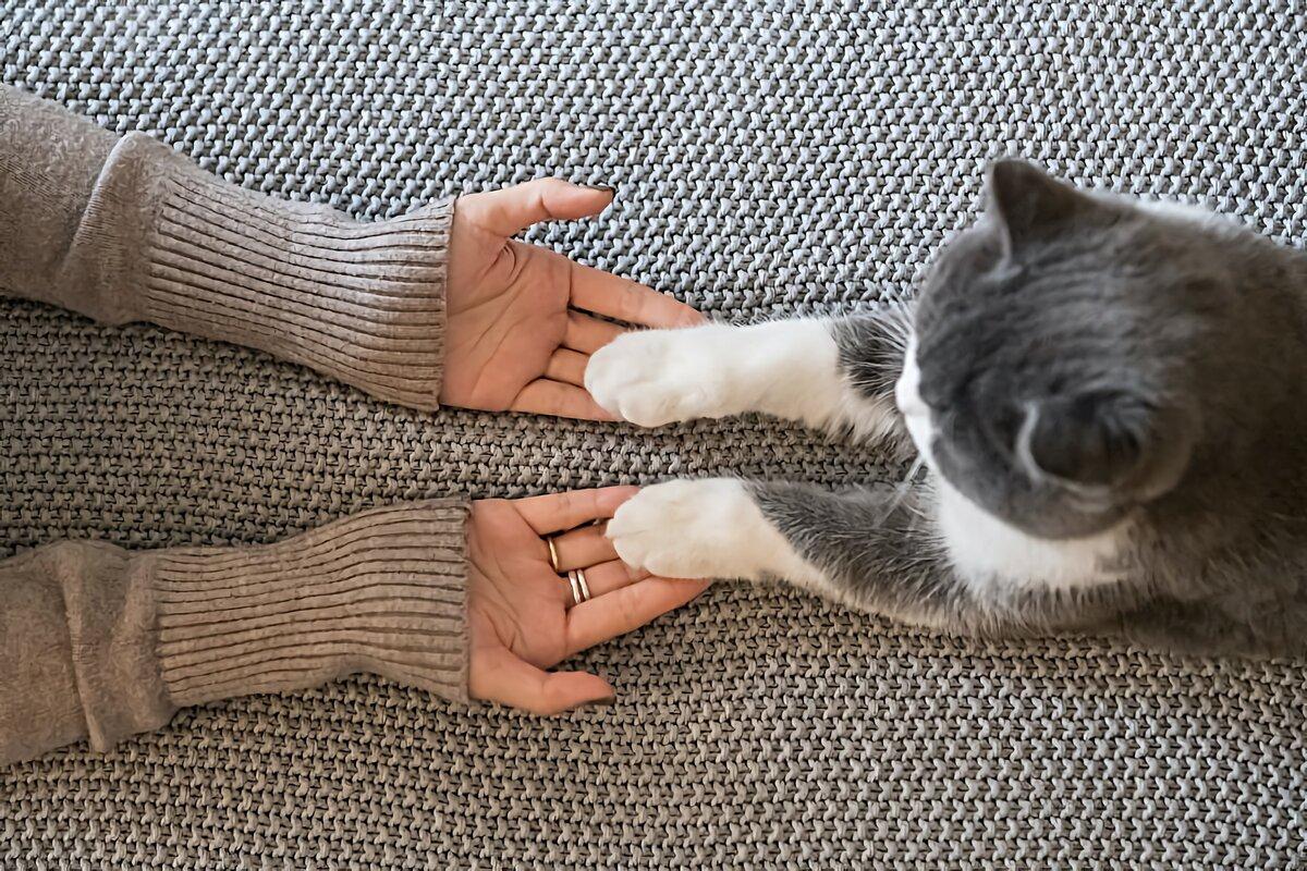 Как отучить кошку кусать руки и ноги: 5 советов