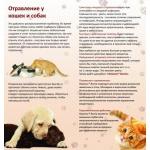 Цветы, которые могут насмерть отравить кота или собаку