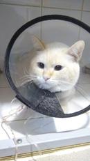 Низкие лейкоциты у кошки: симптомы и лечение