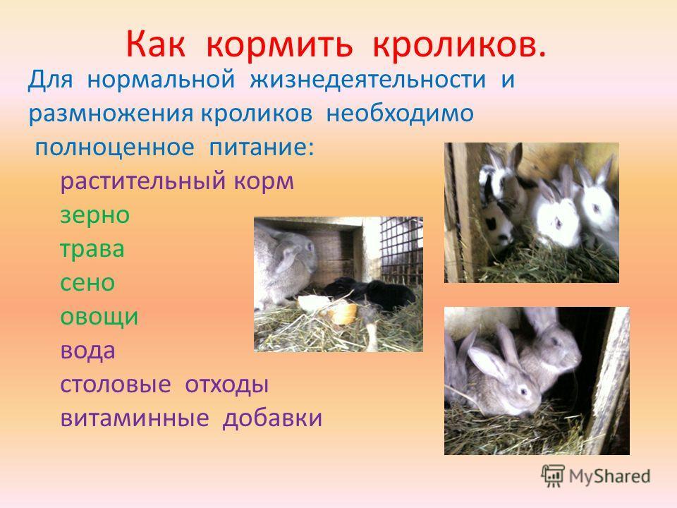 Кролик — это грызун или нет, к какому семейству относятся животное