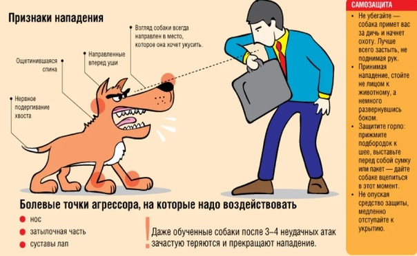 Что делать если напала собака на человека
