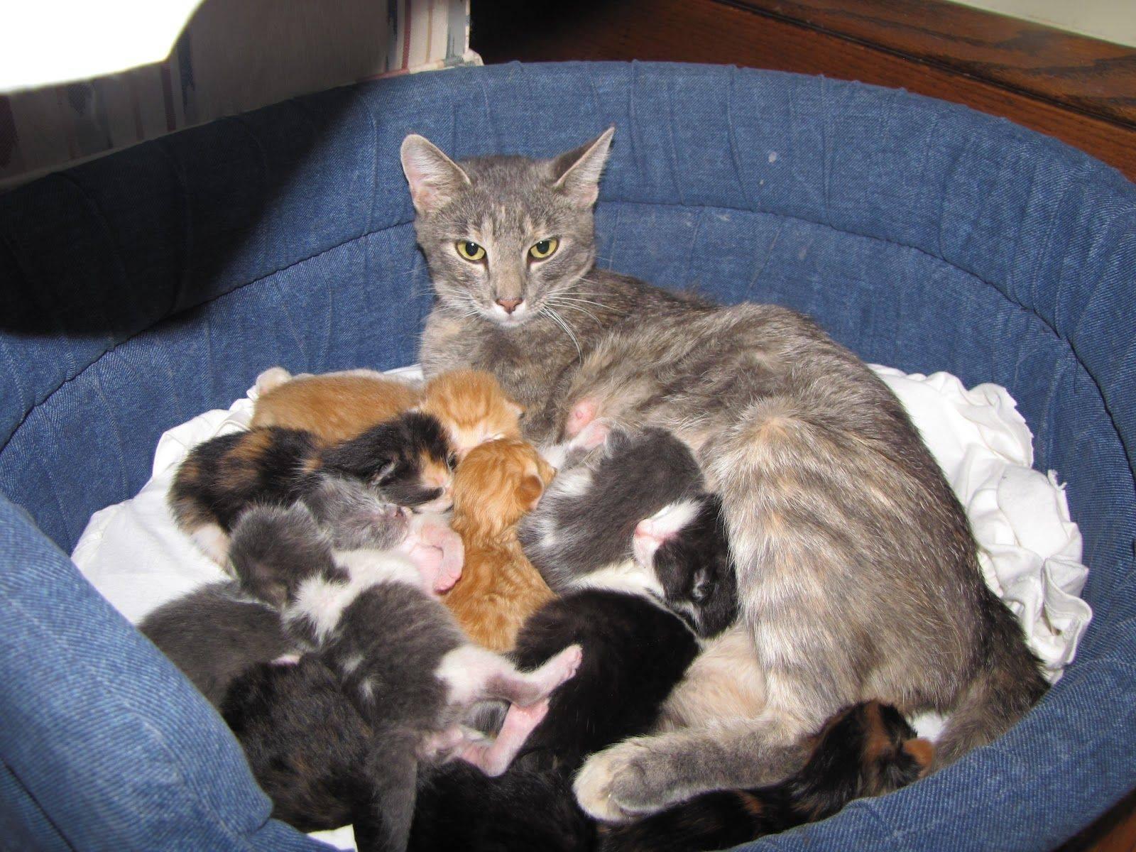 Куда деть котят, если они не нужны и их никто не берет
