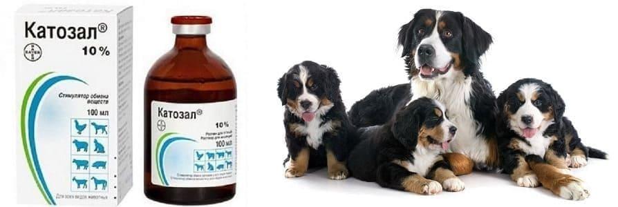 Катозал для собак