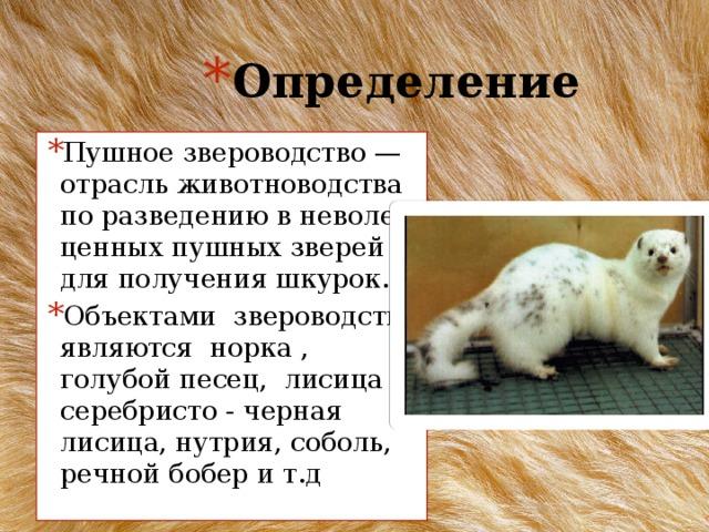 Норка животное — кто такая и как она выглядит