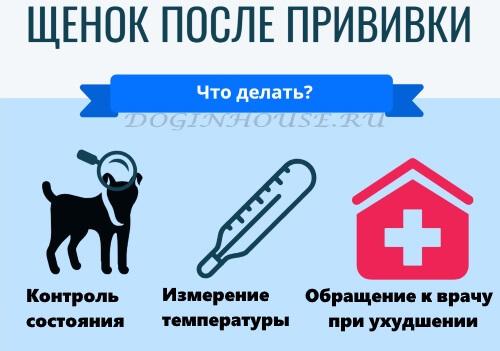 Когда можно гулять с щенком на улицу после первой прививки