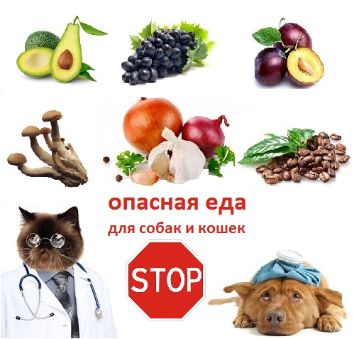 Можно ли собаке грибы, авокадо и прочие продукты