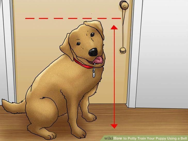 Почему щенок часто мочится и по чуть-чуть