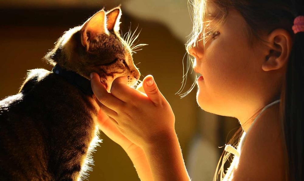 Важность физических нагрузок для кошки