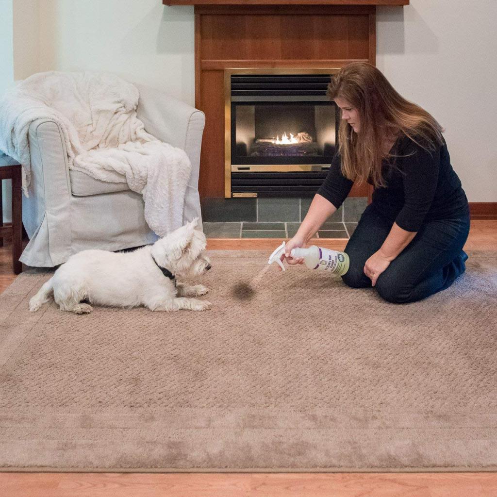 Как избавиться от запаха собаки в квартире