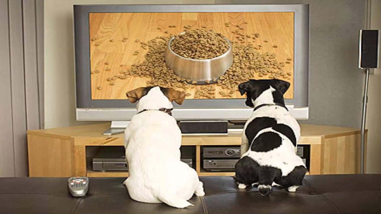 Осмысленно ли животные смотрят телевизор?