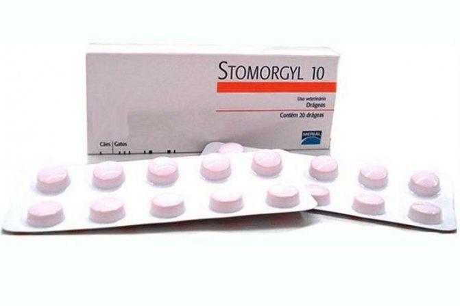 Препарат Стоморджил: эффективное средство в борьбе с бактериальными инфекциями в ветеринарии