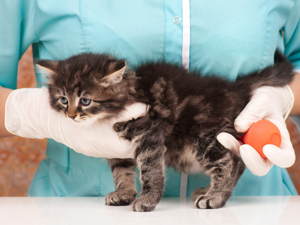 Кот чихает: причины и помощь питомцу