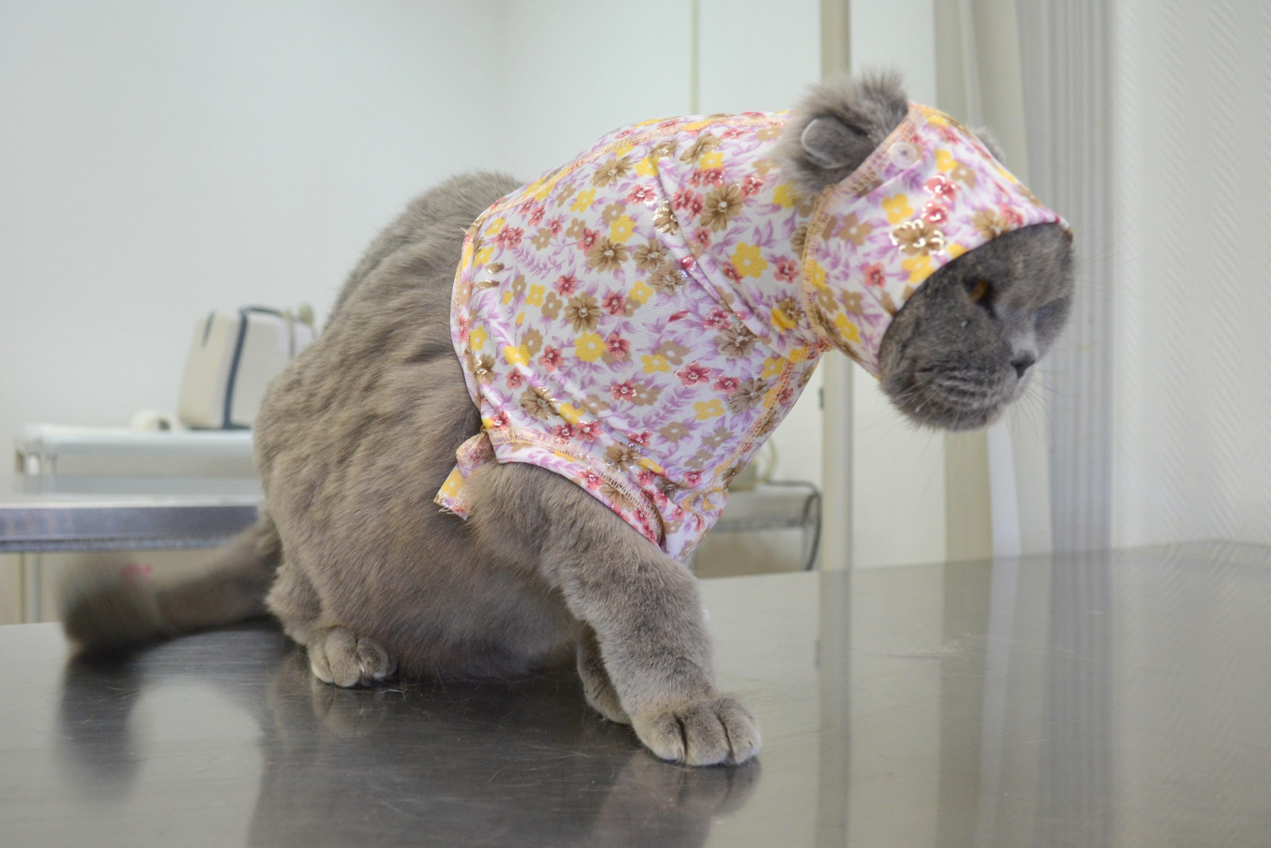 Что такое попона для кошки после стерилизации