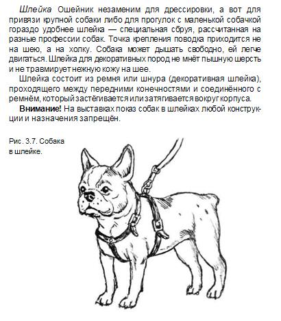 Шлейка для собак мелких и крупных пород: как выбрать