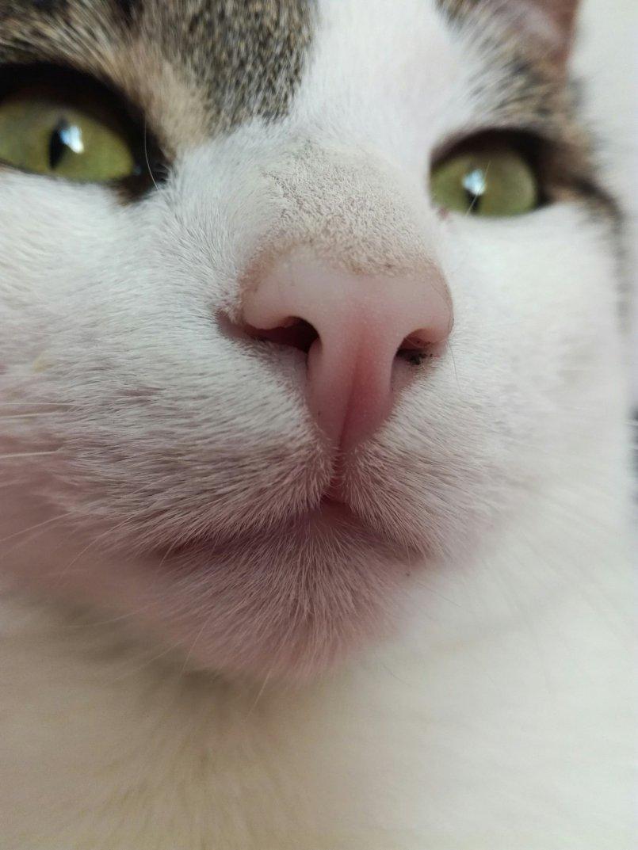 Какой нос должен быть у здоровой кошки и кота