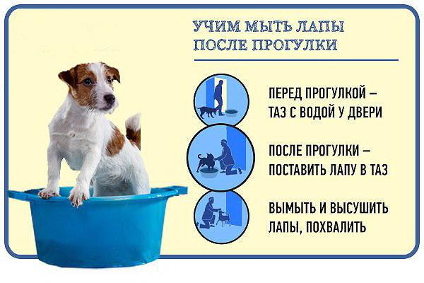 Как ухаживать за собакой правильно в домашних условиях