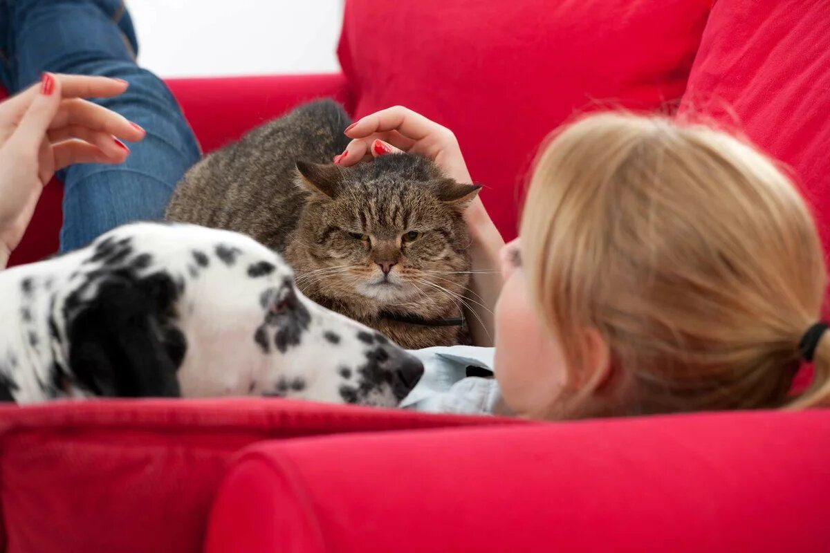 5 признаков, что ваша кошка счастлива и довольна жизнью