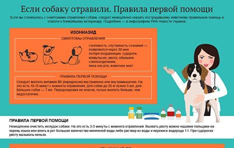 Отравление у собаки: признаки пищевой интоксикации