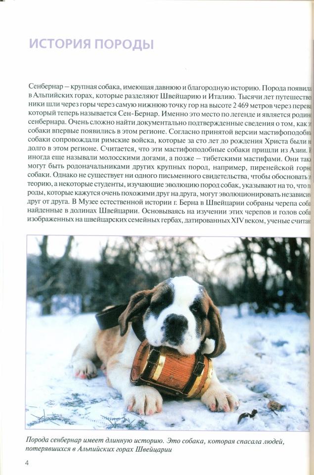 Сенбернар (собака): характеристика породы