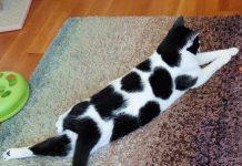 Панофтальмит у кошек: симптомы и лечение