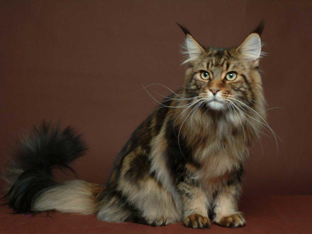 Кошка, похожая на рысь: порода