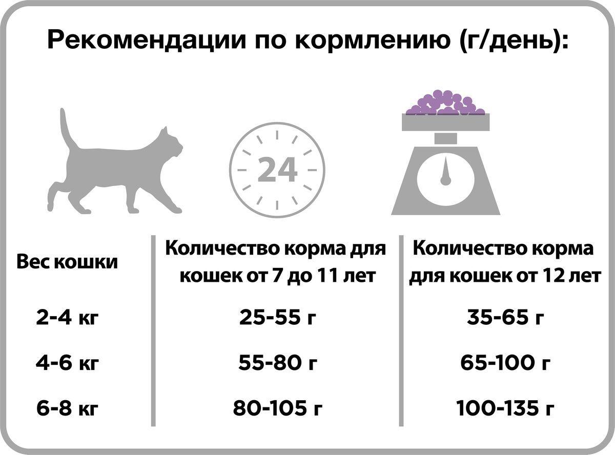 Чем кормить пожилого кота