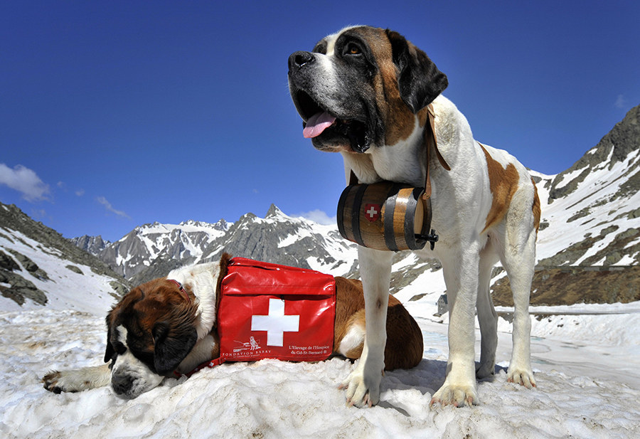 Собаки спасатели на воде и в горах: породы водолазы