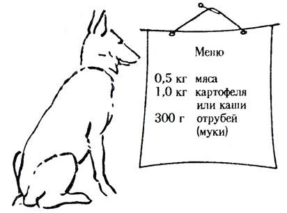Чем кормить овчарку в домашних условиях: меню